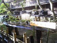 祇王寺の苔