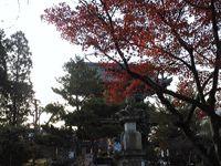 紅葉(清涼寺)