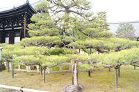 熊谷直実鎧かけの松(金戒光明寺)