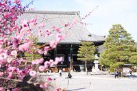 梅(清涼寺)