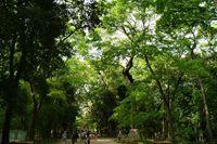 糺の森(下鴨神社)