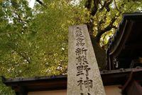 大樟(新熊野神社)