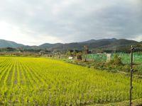 嵯峨野 田園風景