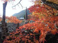 紅葉(あだし野念仏寺)